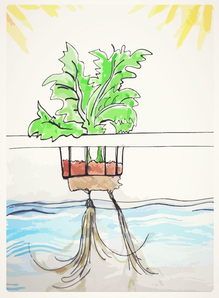 hydroponic farming illustration, credit: Julia Travers (jtraversart.wordpress.com)
