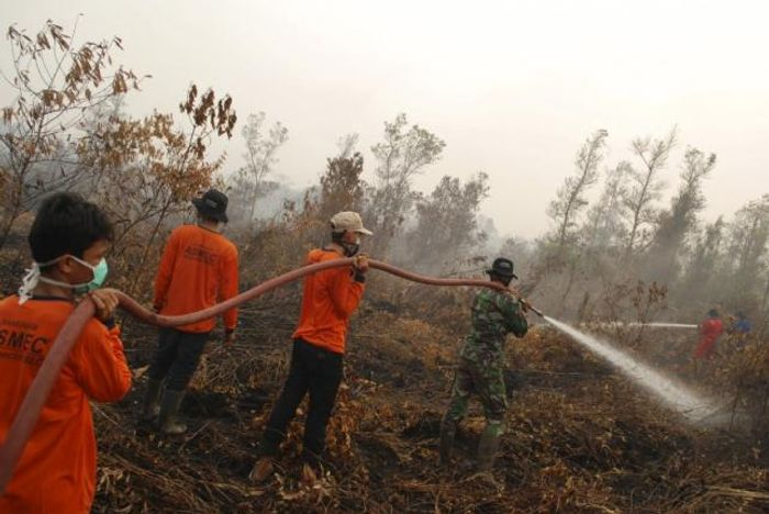 An Indonesian soldier and volunteers try to extinguish a fire in a peatland in Rimbo Long. Photo: www.newsnish.com