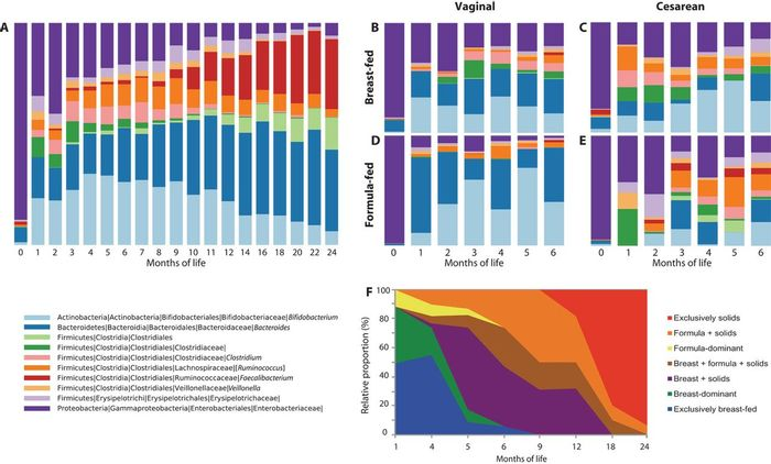 Microbial and dietary succession over first 2 years of life. Mean relative abundance (RA) of fecal bacteria at the genus level at each month of life, for taxa ?1% (A) All 43 infant subjects during the first 2 years of life. (B to E) The first 6 months of life for the 32 subjects who were not antibiotic-exposed, organized by delivery mode (vaginal or cesarean) and predominant feeding mode (breast or formula). Vaginal-breast, n = 15; cesarean-breast, n = 7; vaginal-formula, n = 3; cesarean-formula, n = 7. (F) Dietary trends in all infants across the study period. Image: Science Translational Medicine/Bokulich et al