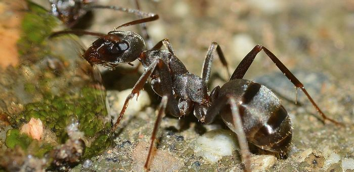Ants would partake in agriculture to grow their own food, and they adapted well to new climate conditions.