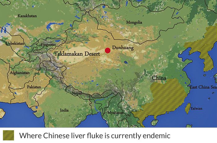 The current site where liver fluke is found is nowhere near the location on the Silk Road (red dot) where it's eggs were identified. / Credit: Yeh et al. Reproduced from the Journal of Archaeological Science: Reports
