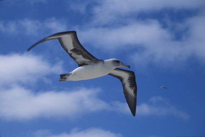 It's not a good time to be an albatross.
