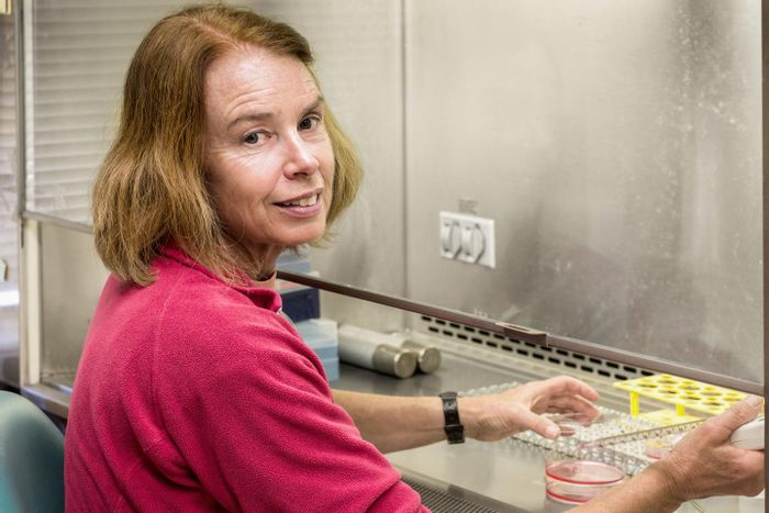 Salk scientists find benefits of antioxidant fisetin in mouse model of premature aging, Alzheimer's disease. Pamela Maher is pictured. / Credit: Salk Institute