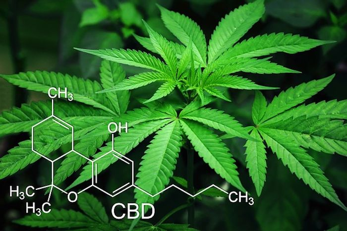 So Why Does Weed Even Have THC? | Cannabis Sciences
