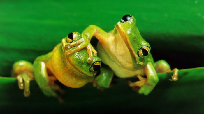 Frogs may be experiencing a sex ratio imblance due to road salts.