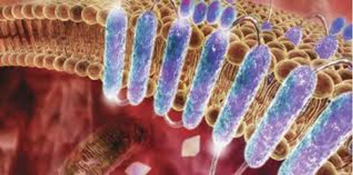 Within the cell membrane, proteins are designed to fold and function within the lipid bilayer.