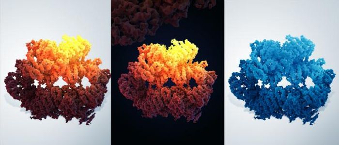 Three-dimensional structure of the yeast Mec1-Ddc2 complex, a homolog of human ATR-ATRIP. / Credit: ©University of Science & Technology of China,Illustration: Guoyan Wang and Yanbing Ma
