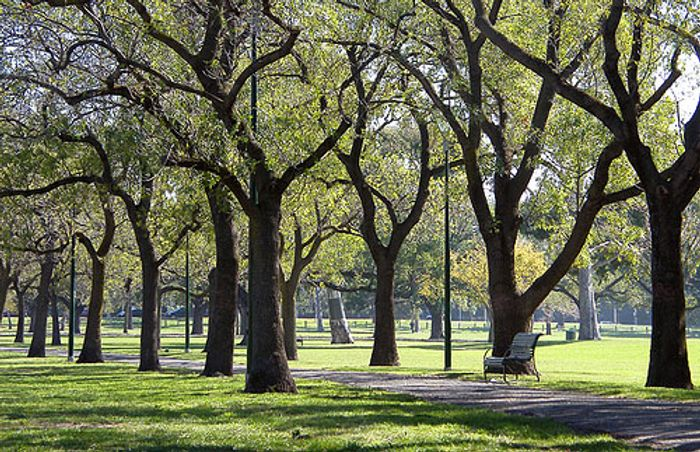 image of trees in Melbourne, credit: sourceable.net