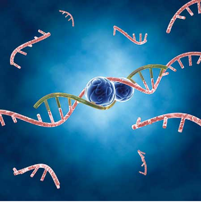Micro-RNAs or miRNAs contribute to the repression of gene translation in humans and animals.