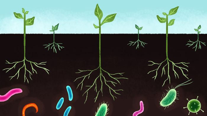 Microbe communities in soil and water systems have important ecological roles. Photo: Grist