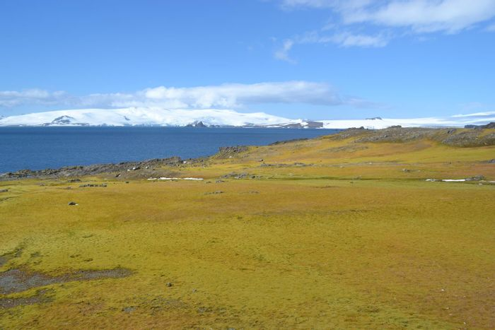 This photograph shows Green Island moss bank with icebergs in background. / Credit: Matt Amesbury