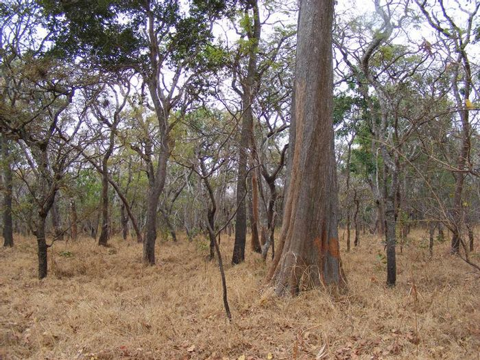 The Miombo woodlands offer crucial habitat for wildlife. Photo: VegetationMap4Africa