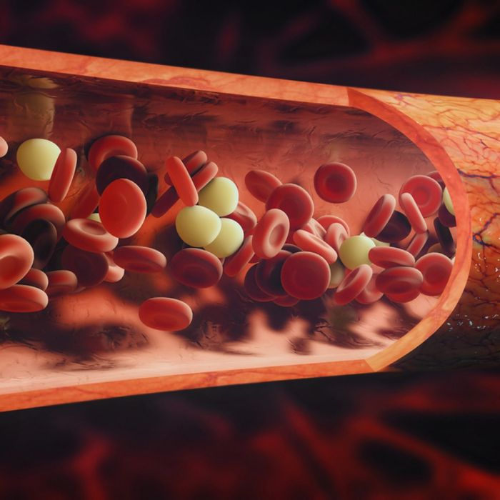 Patrolling monocytes in the bloodstream