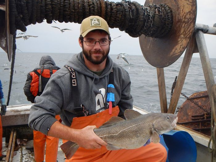 Cod populations are in peril because of warming waters. Photo: NPR