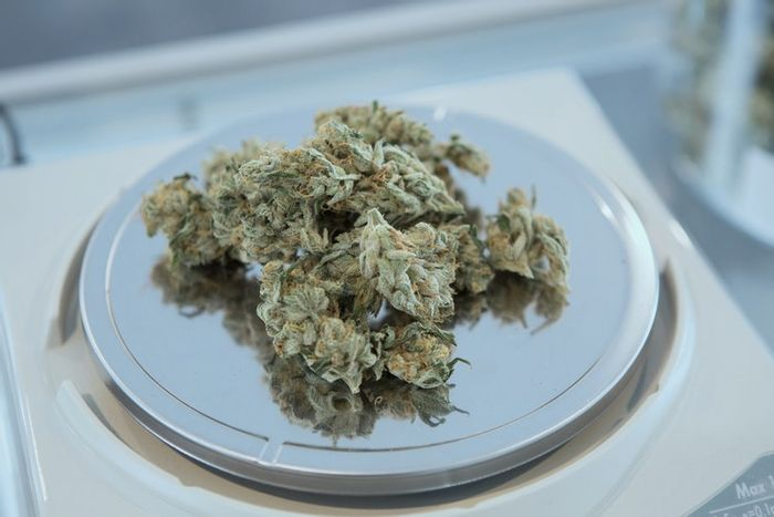 Image: marijuana, credit: public domain