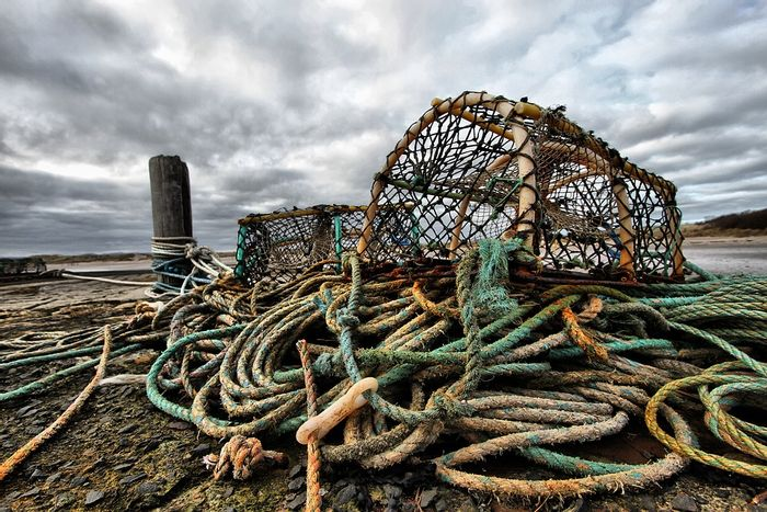 The lobster fishery in the Gulf of Maine is a billion dollar industry. Photo: Pixabay