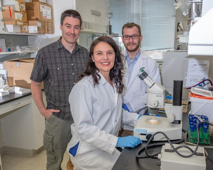 Michigan State University microbiology professor Chris Waters (pictured left), with research associates Micheal Maiden and Alessandra Hunt, have found that a common antibacterial substance found in toothpaste may combat life-threatening diseases such as cystic fibrosis when combined with the already FDA-approved antibiotic tobramycin. /Credit: Derrick Turner