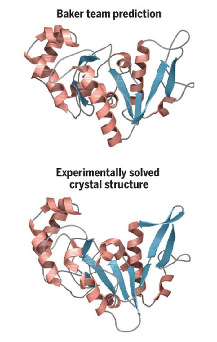 In a protein-folding competition, Baker's team stunned judges by almost matching the actual structure. / Credit: V. Altounian/Science