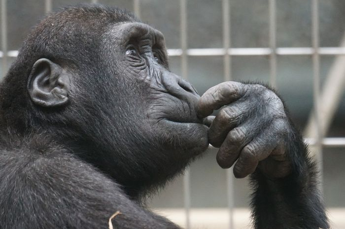 Primates around the world are in trouble, and we have very little time to do anything about it.