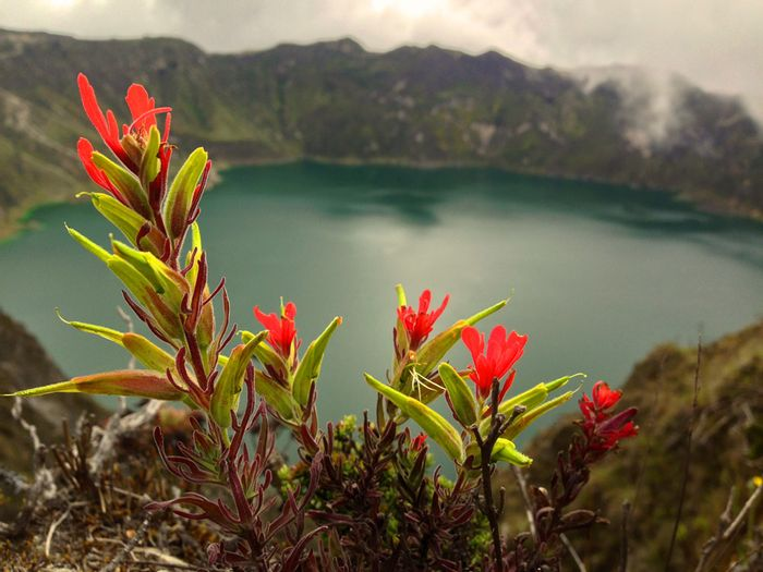 I saw several species of wildflowers like this along the route. Photo: Wandermuch.com