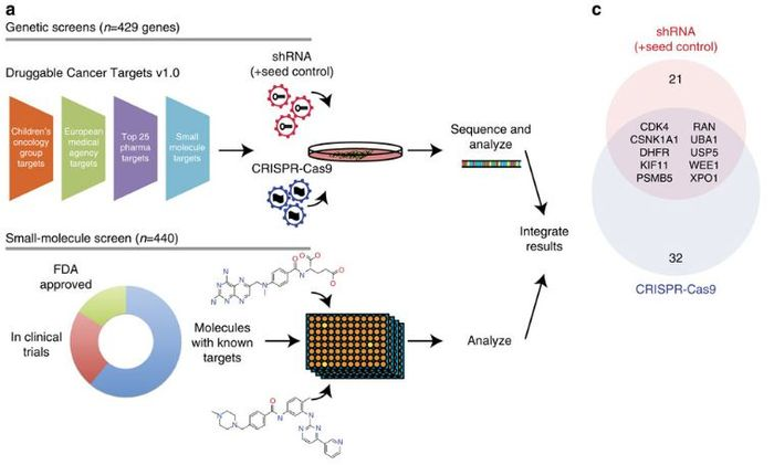 Workflow for this proof-of-concept personalized medicine.
