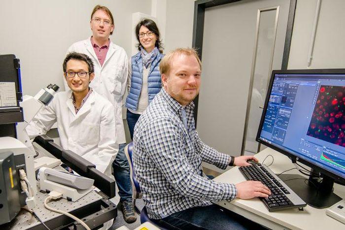 This is Kaibo Xie, Lars Leichert, Konstanze Winklhofer und Verian Bader (from the left). / Credit: RUB, Marquard