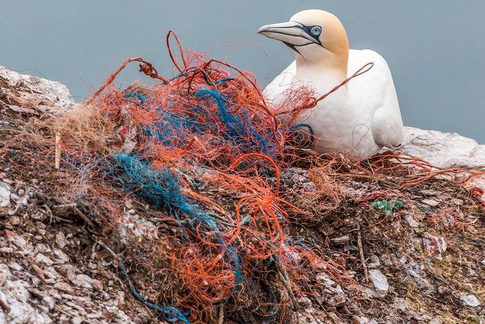 The global plastic crisis threatens wildlife and humans alike. Photo: Pixabay