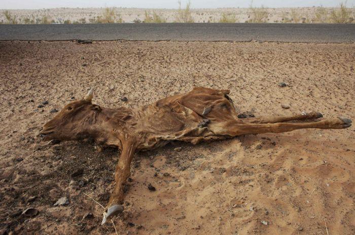 Drought threatens the Sahel. Photo: Al Jazeera