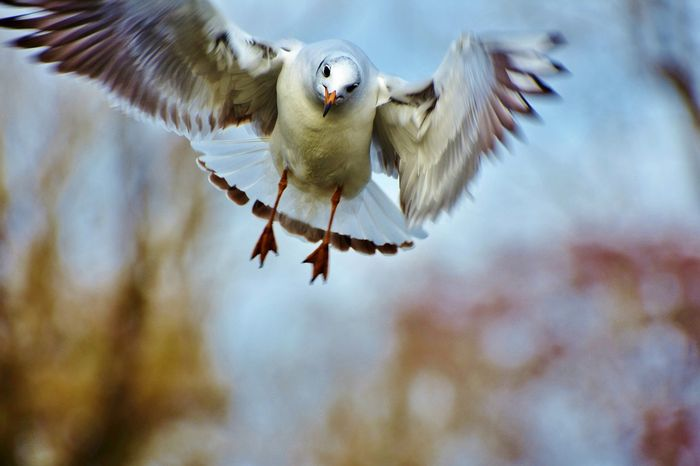 Seagulls will eat just about anything, and that's not exactly a good thing...
