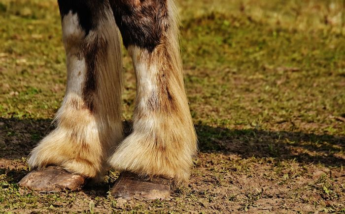 Horses have hooves today, but they might have had up to 5 toes per foot back in the day.