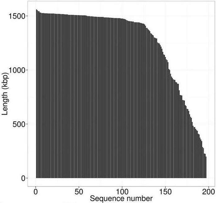16S rRNA gene length distribution from Moleculo-only contigs. / Credit: mSystems White et al