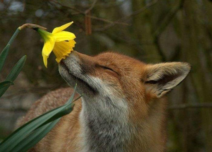 Photo: My Garden Journal