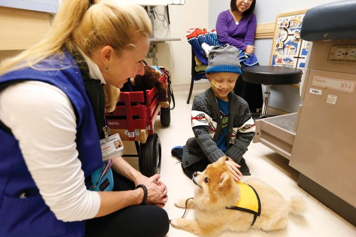 Swoosh, a therapy dog at work, credit: Vanderbilt.edu